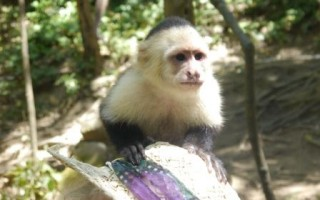 Up close with nature in Roatan