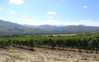 Wines of Macedonia
