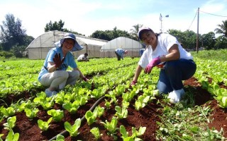 Organic community farming in Havana