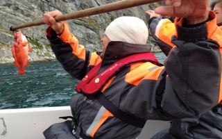 catching redfish in Greenland
