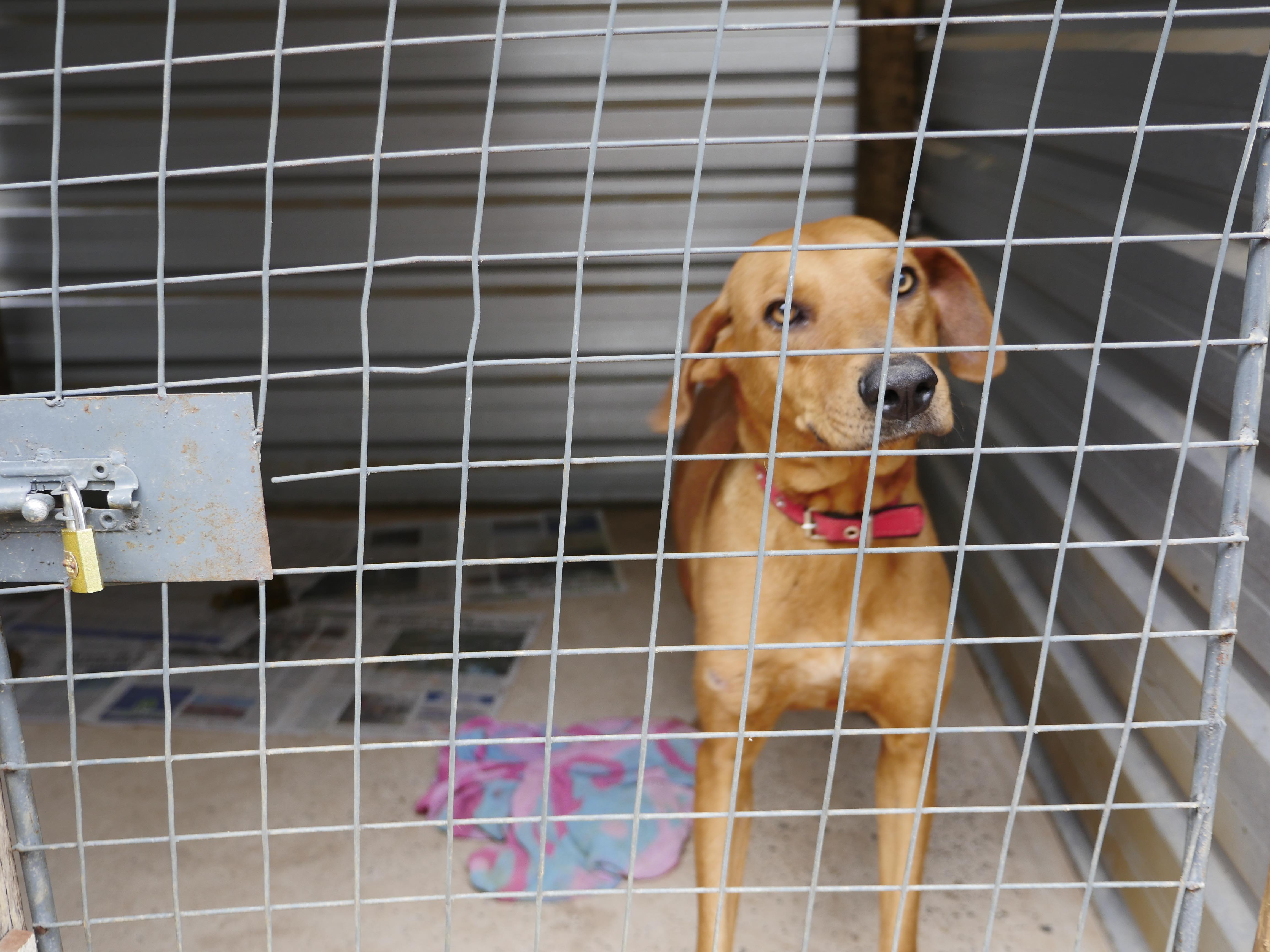Find and Fly – Brazilian Street Dogs Immigrate To Loving Homes Oversees