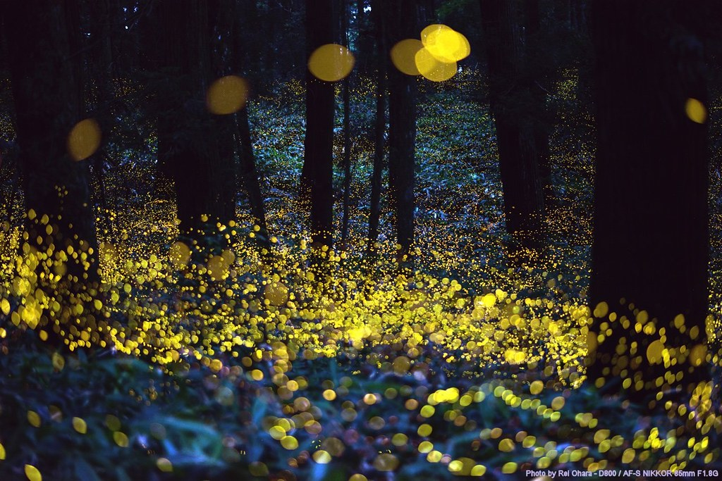 You Don't Want To Miss This Fireflies Festival in South Carolina